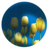 視野欠損の進行パターン(右眼)の中期